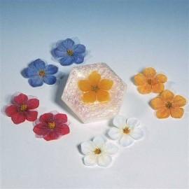 Décorations pour Savon fleurs